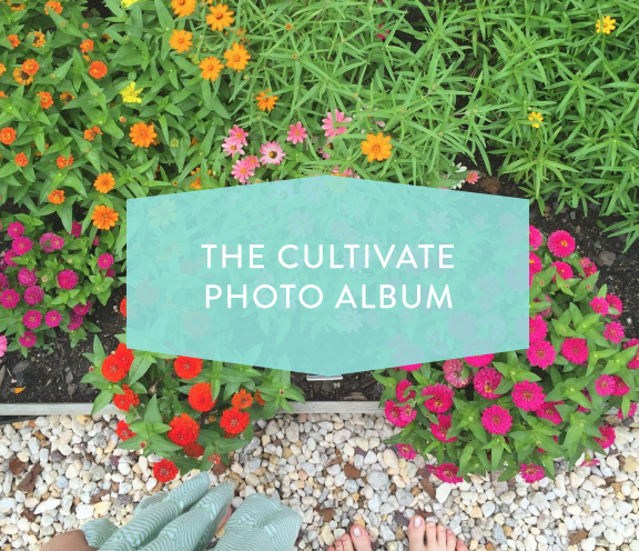 The-Cultivate-Photo-Album
